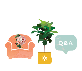 Couch / plant / Q&A