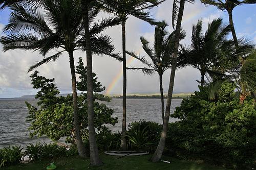 dear hawaii