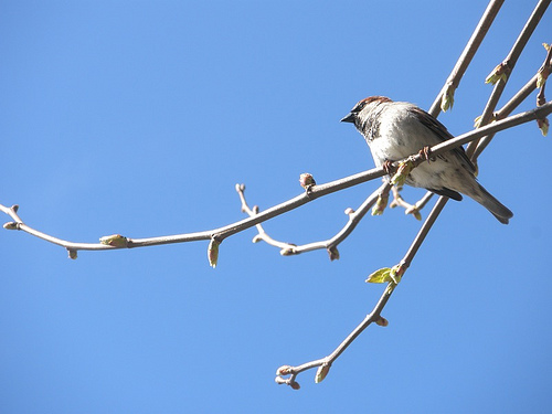 From the archives: What I learned when I witnessed a bird knock himself out