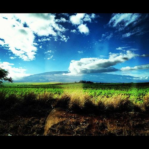 Hello, Maui