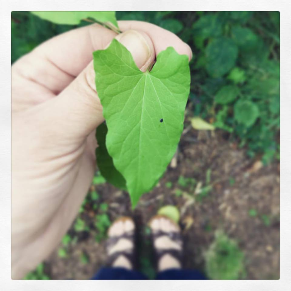 KRR leaf heart