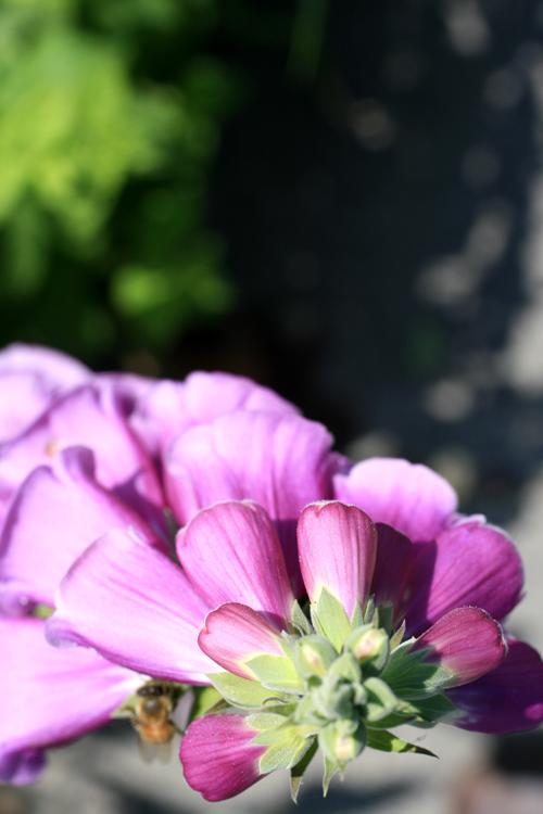 pretty flower 2.jpg