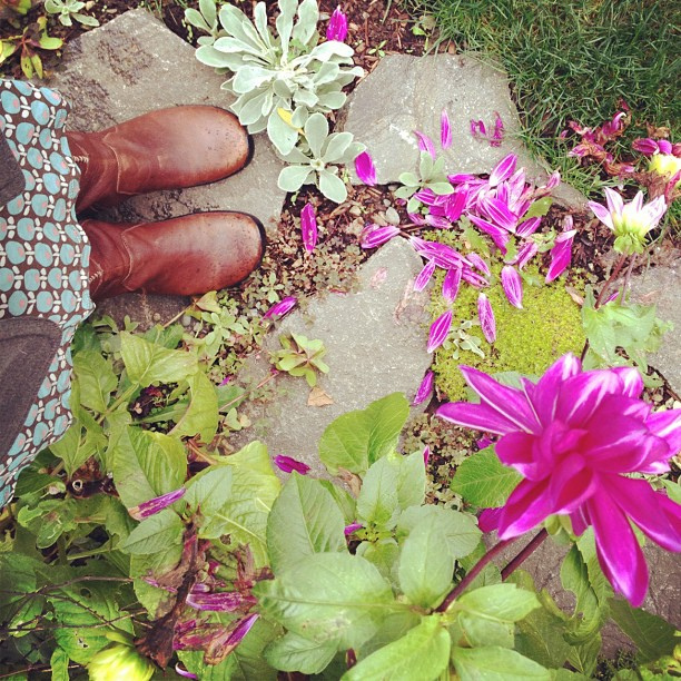 I love our stepping stone garden right now.