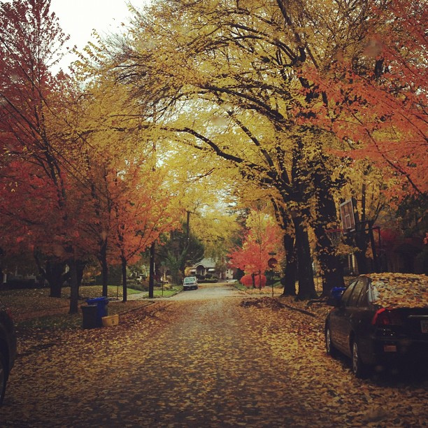 View from our hood. Amazing Autumn.