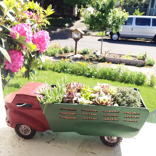 Our #succulents are super #happy with all this warm sun. And so are we. Love that you can see our #freelittlelibrary and #veggieboxes in this photo.