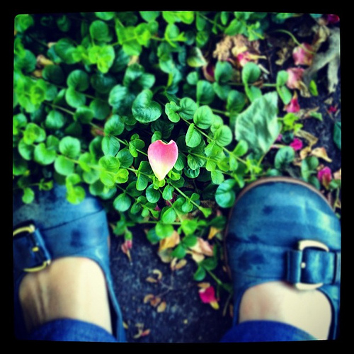 Petal heart. Found in a walk with True this morning.