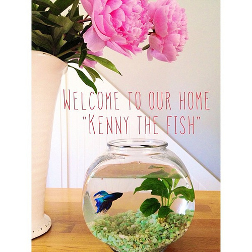 "So this happened today. Life with a toddler is proving to take me back. All the way back. When I asked him what we should call him, he paused for a moment and then declared ""Kenny the fish."" And so it is, and begins."